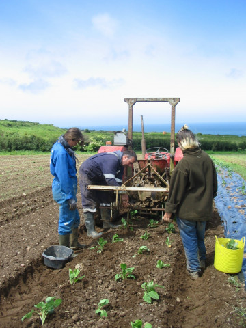 Farming at Caerhys farm