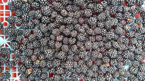 Preserving seasonal fruits!