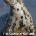 The laws of nature cover