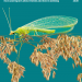 Insect atlas 2020